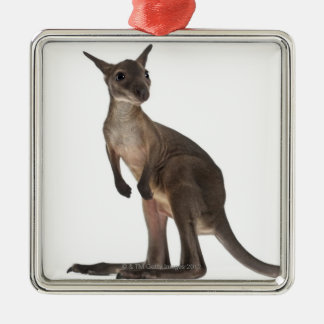 Wallaby - Macropus robustus (3 months old) Metal Ornament