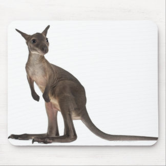 Wallaby - Macropus robustus (3 months old) Mouse Pad