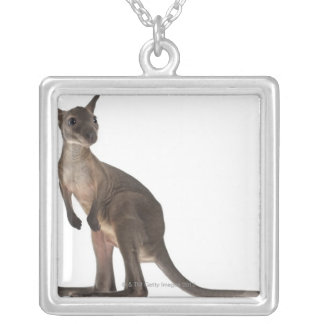 Wallaby - Macropus robustus (3 months old) Silver Plated Necklace