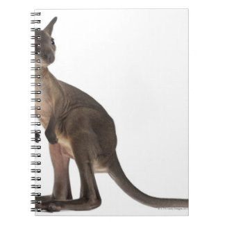 Wallaby - Macropus robustus (3 months old) Spiral Notebook