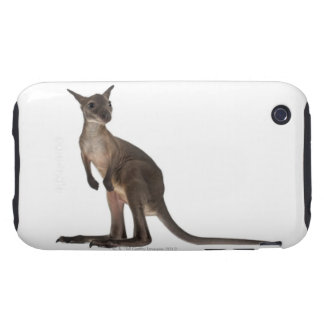 Wallaby - Macropus robustus (3 months old) Tough iPhone 3 Cover