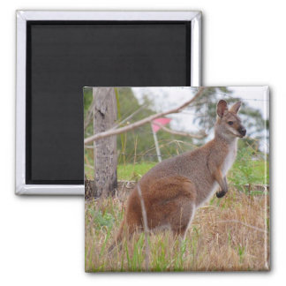 wallaby magnet