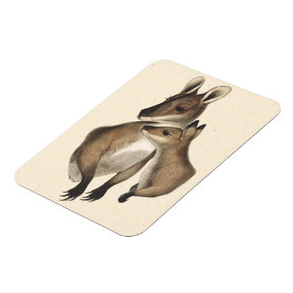 Wallaby Mother and Baby (painted) Magnet