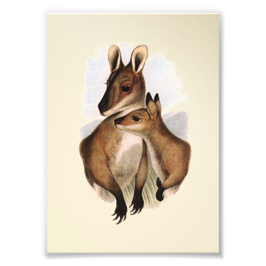 Wallaby Mother and Baby (painting) Photo Print