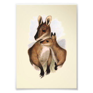 Wallaby Mother and Baby (painting) Art Photo