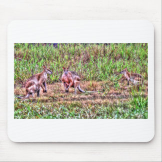 WALLABY QUEENSLAND AUSTRALIA ART EFFECTS MOUSE PAD