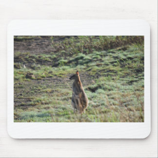 WALLABY QUEENSLAND RURAL AUSTRALIA MOUSE PADS