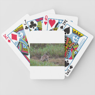 WALLABY RURAL QUEENSLAND AUSTRALIA BICYCLE PLAYING CARDS