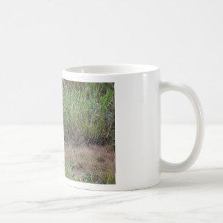 WALLABY RURAL QUEENSLAND AUSTRALIA COFFEE MUG