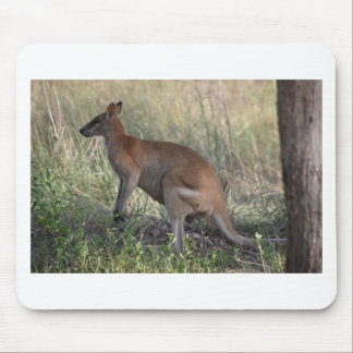 WALLABY RURAL QUEENSLAND AUSTRALIA MOUSE PAD