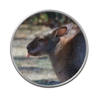 Wallaby Sticking Tongue Out Jelly Belly Candy Tins