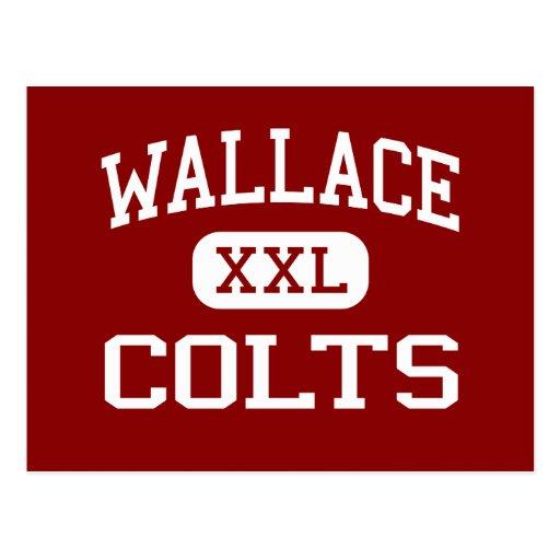 Wallace - potros - joven - Parker Arizona Postales