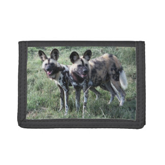 Wallet - painted dog