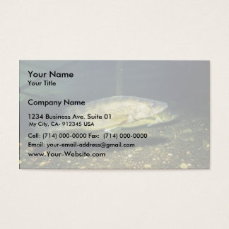 Walleye Business Card