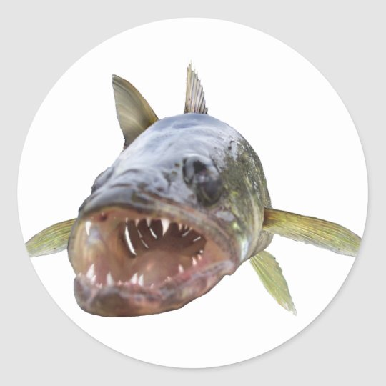 Walleye Face 8 Classic Round Sticker