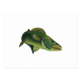WALLEYE FISH POSTCARD