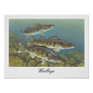 Walleye Painting Poster Poster