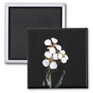 Wallflower Magnets