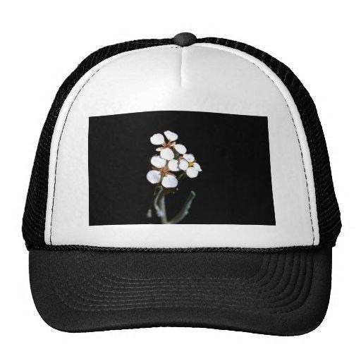 Wallflower Trucker Hat