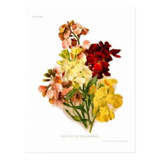 Wallflowers Postcard