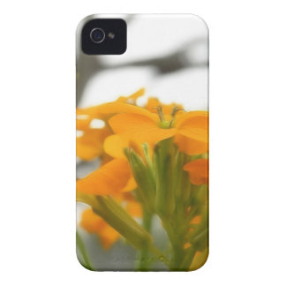 Wallflowers Under The Old Oak iPhone 4 Case-Mate Case