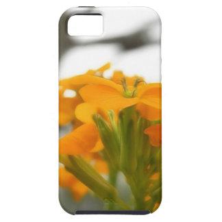 Wallflowers Under The Old Oak iPhone SE/5/5s Case