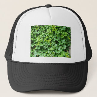 Wallpaper from leaves of grapes trucker hat