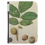 Walnut, c.1568 (w/c on paper) kindle covers