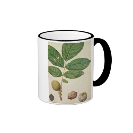 Walnut, c.1568 (w/c on paper) mug