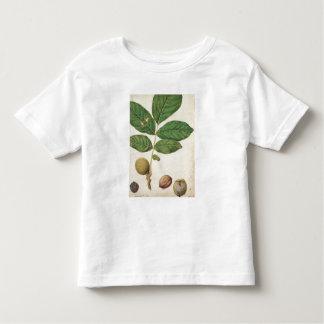 Walnut, c.1568 (w/c on paper) toddler t-shirt