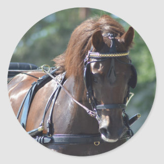 walnut hill carriage driving horse show classic round sticker
