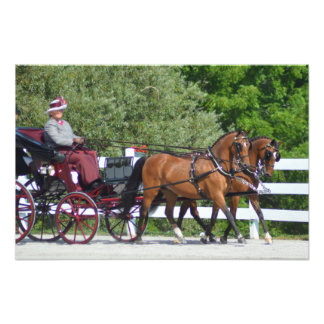 walnut hill carriage driving horse show photo print