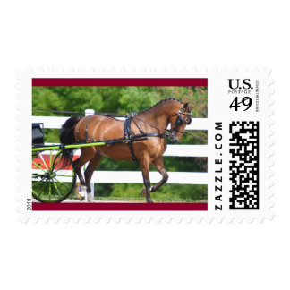 walnut hill carriage driving horse show postage
