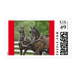 walnut hill carriage driving horse show postage stamp