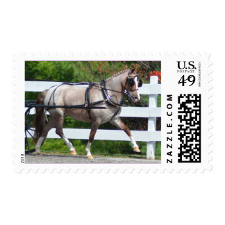 walnut hill carriage driving horse show stamp