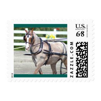 Walnut Hill Carriage Driving Show 2015 Stamp