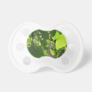 Walnut tree branches with green leaves pacifier