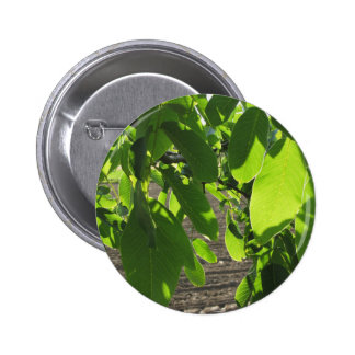 Walnut tree branches with green leaves pinback button