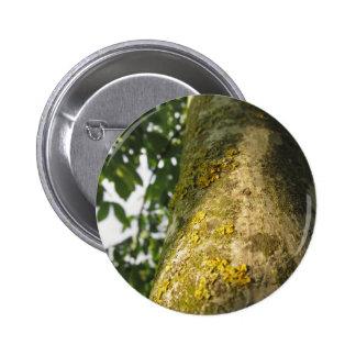 Walnut tree trunk with yellow moss fungus pinback button