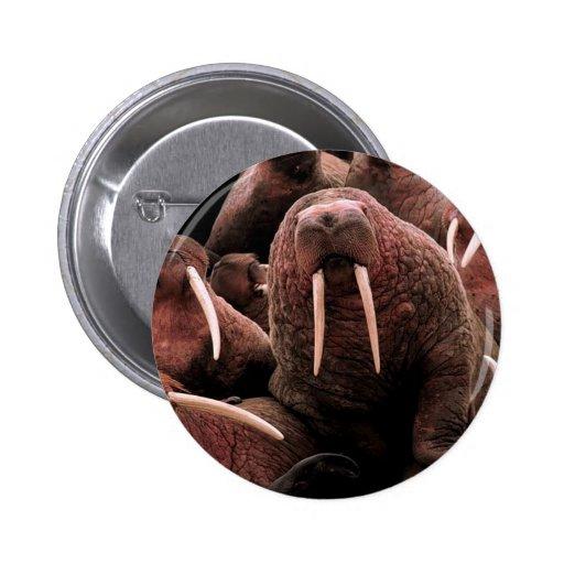 Walrus 2 Inch Round Button