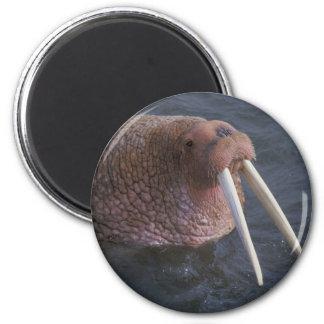 Walrus 2 Inch Round Magnet