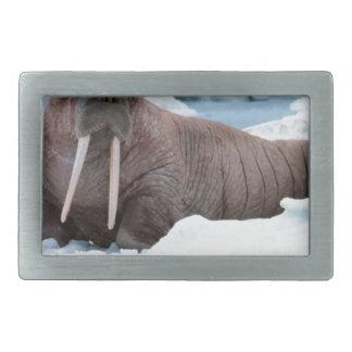 Walrus Belt Buckle