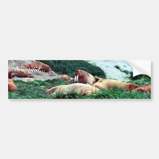 Walrus Bumper Sticker