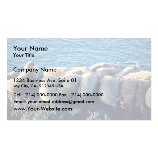 Walrus Business Card Templates