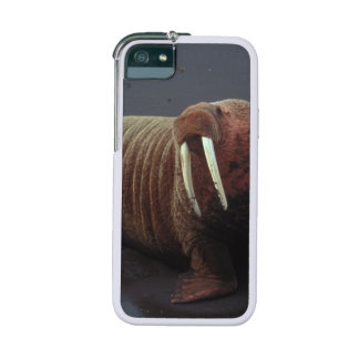 Walrus iPhone 5 Covers