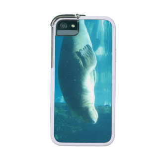 Walrus iPhone 5/5S Cases
