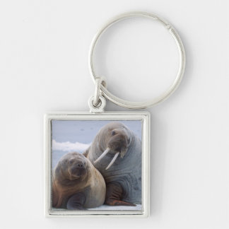 Walrus cow and calf rest on a sea ice floe keychain