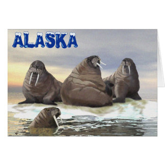 Walrus - Four Brothers Card