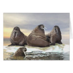 Walrus - Four Brothers Cards