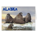 Walrus - Four Brothers Greeting Cards
